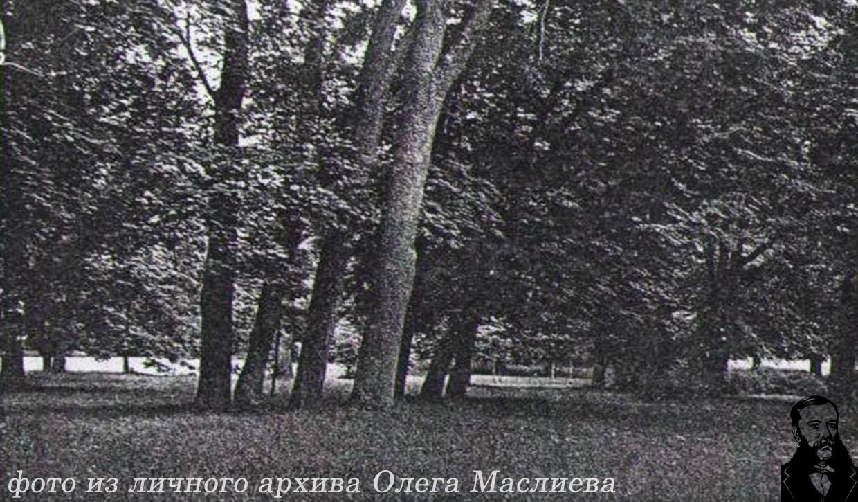 Парковые группы в Станьково.